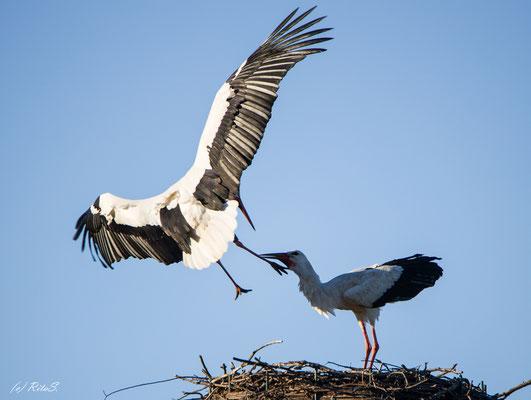 ...dann kommt der Storch DEW7T308 ins Nest