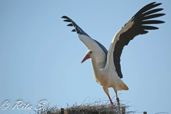 MAX beim Absprung vom Nest...