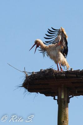 Wie sieht der Storch nur aus?