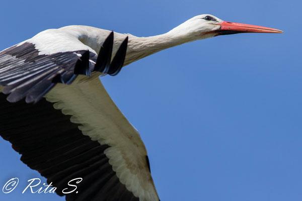 ..und auf gehts für den anderen Storch...