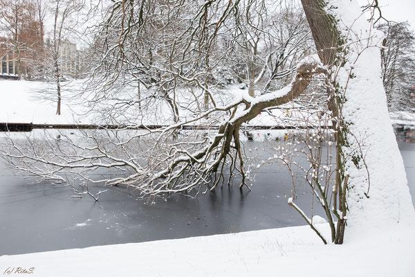 der alte Baumbestand kommt auch im Winter schön zur Geltung