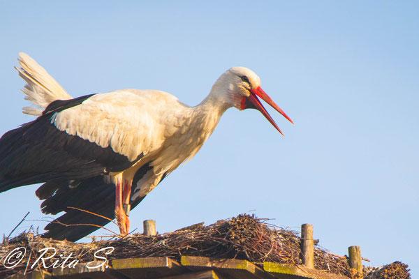 Storch MAX präsentiert seine volle Storchenpower