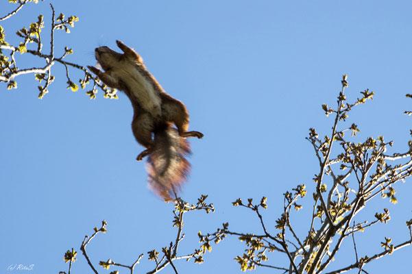 ...ein weiter Sprung von Baum zu Baum
