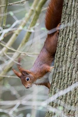 ...es muss nur aufmerksam danach suchen  - entweder links vom Baum...