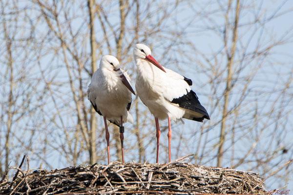 Das Storchenpaar auf dem Nest bei den Bootshäusern an der Hamme.