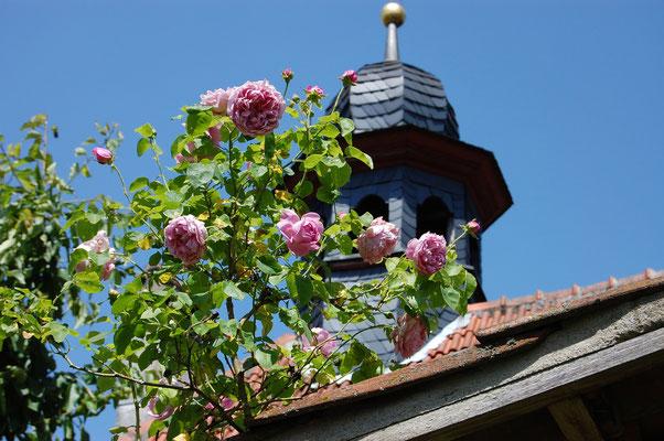 Der Glockenturm mit englischer Rose