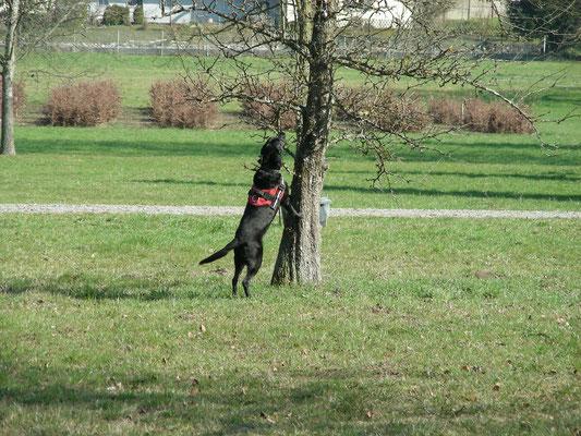 ALB Spürhund Maisha bei der Einortung der Probe