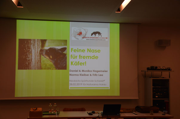 Anoplophora Spürhunde Schweiz Asiatischer Laubholzbockkäfer