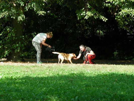 Asiatischer Laubholzbockkäfer Spürhund im Fokus