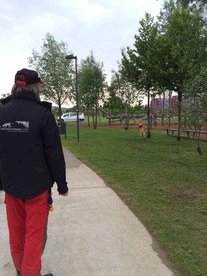 ALB-Spürhund Grace in einer Parkanlage (Foto Mirella Manser, ALB-Spürhundeführerin)
