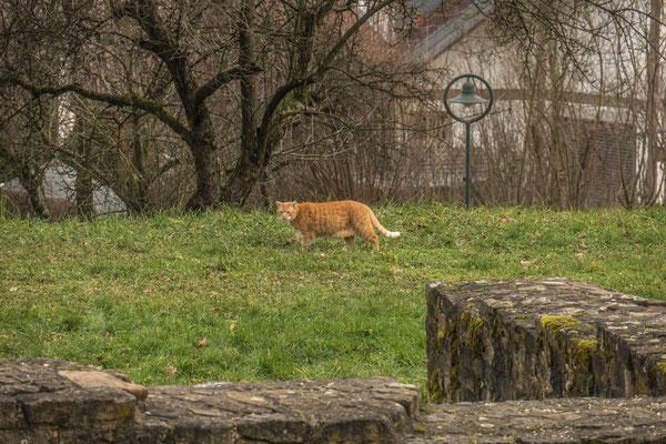 © Traudi - Die Katze, ebenfalls auf den Spuren der Römer