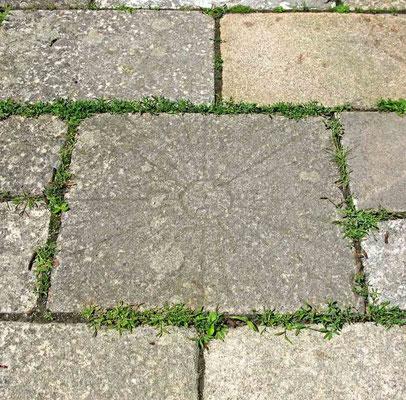 Neckartailfingen, Steinplatte auf dem Weg zur Kirche – © Traudi