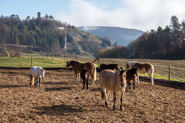 © Traudi – Blick zum Schlossturm der Burg Schelklingen