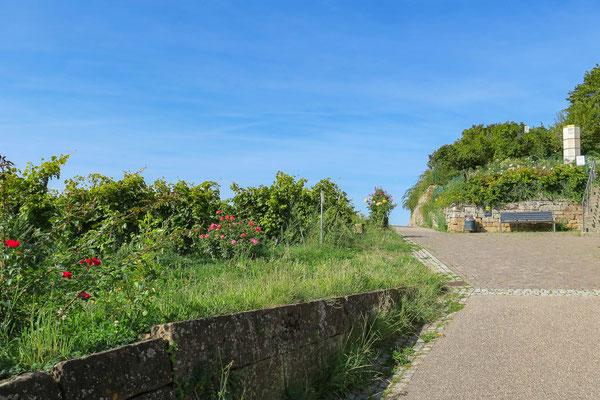 © Traudi - Der Weg zur Burg. Im Hintergrund steht die Staufer-Stele