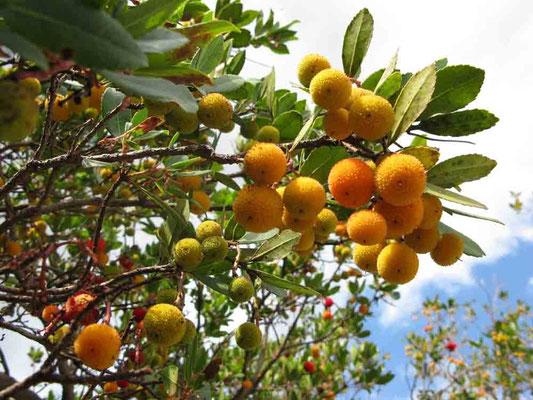 © Traudi - Foto 2010 *** Was sind das für Früchte?