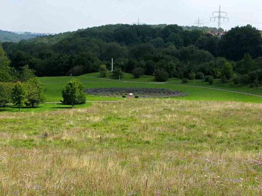 Hohenheim,  Blick zum Lavendellabyrinth -  © Traudi
