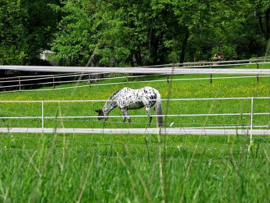 """© Traudi  -  Pipi Langstrumpf's Pferd, der """"Kleine Onkel"""""""