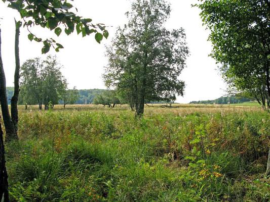 © Traudi – Schopflocher Moor