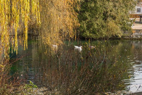 © Traudi – Urspring-Quelle beim Kloster Urspring