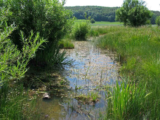 © Traudi – Schopflocher Moor, Tümpel