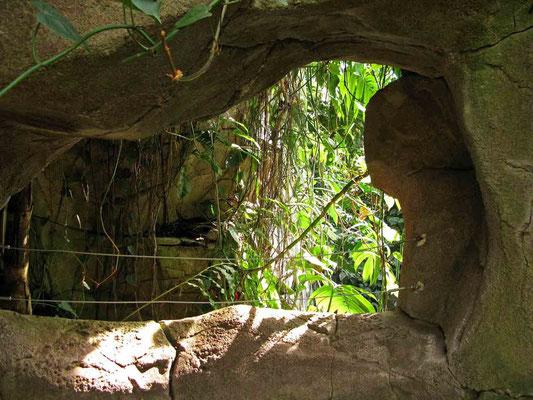 © Traudi - im Amazonienhaus