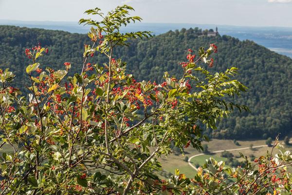 © Traudi - Blick zur Burg Teck
