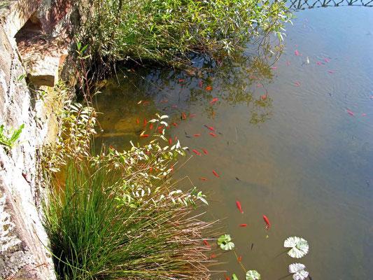 © Traudi  -  kleine Goldfische vor dem Schlosspark