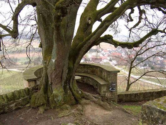 Foto 2005 (c) Traudi / alter Baum