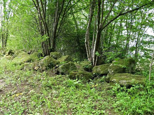 © Traudi  -  bemooste Steine auf dem Weg zur Burgruine Kappelberg