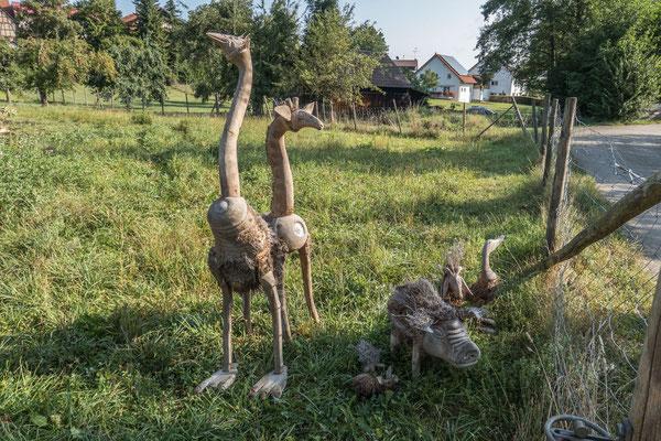 © Traudi - aus Bambuswurzeln von Asiaten gefertigt: Strauß, Giraffe, Ziege, Ente, Hausschwein mit Ferkeln