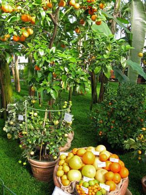 © Traudi - Zurzeit findet eine Zitrusfrüchte- Ausstellung statt