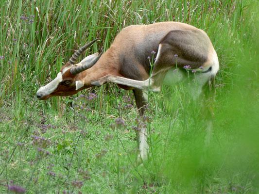 Saragossa Game Reserve
