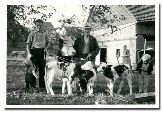 1973 - Opa Jakob, Vater Alfred, Sohn Helmut (rechts) und die Drillingskälber