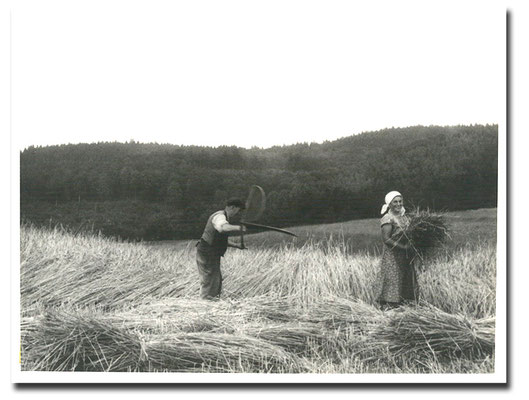 1950 - Opa Jakob und Oma Ottilie bei der Getreideernte