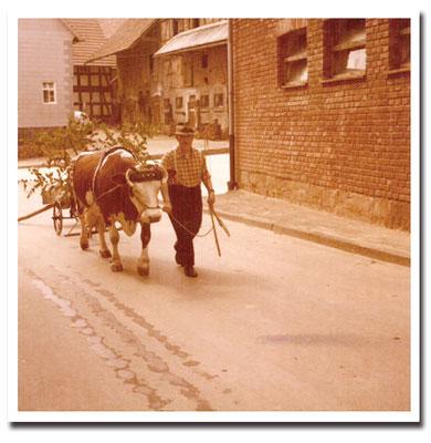 1962 - Opa Jakob mit Kuhgespann
