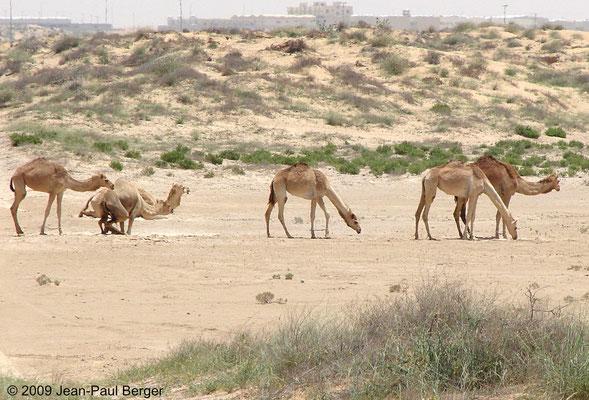 Dunes côtières et urbanisation près de Umm Al Quwain