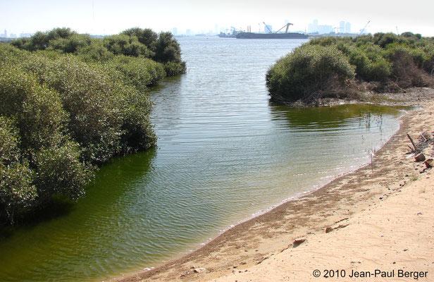 Mangrove à Ajman - Vue sur le port
