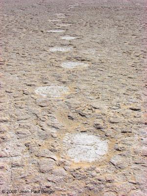 Empreintes d'éléphants (Mleisa 1) à l'Ouest d'Abu Dhabi, datées de 6 à 8 Ma