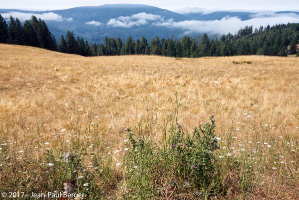 Redwood Mountains