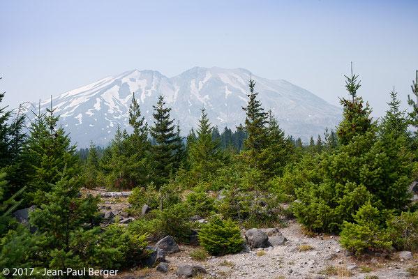 Mt St-Helens - Versant Sud; jeunes arbres