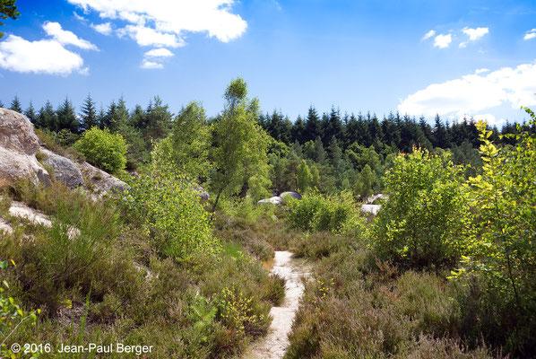 Forêt des Colettes - La Bosse (Carrière de kaolin abandonnée)