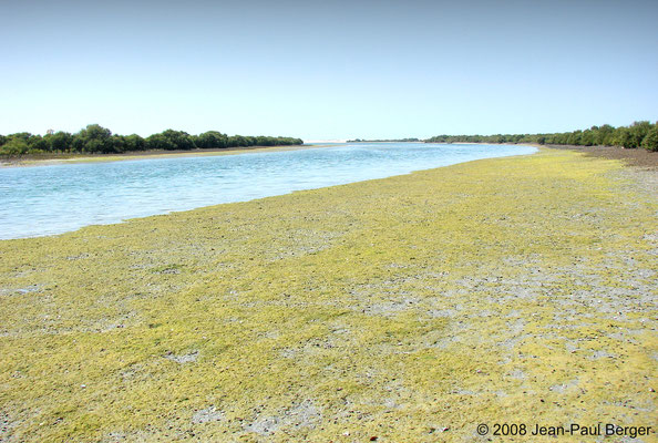 Mangrove à Ajman - Le chenal