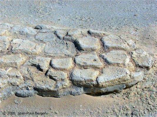 Strate de boue craquelée consolidée dans laquelle ont été fossilisisées les empreintes (Mleisa 2)