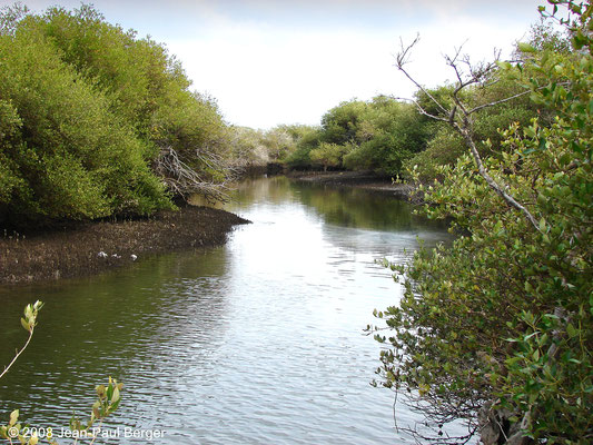 Mangrove de Khor Kalba (Rivage de l'Océan Indien)