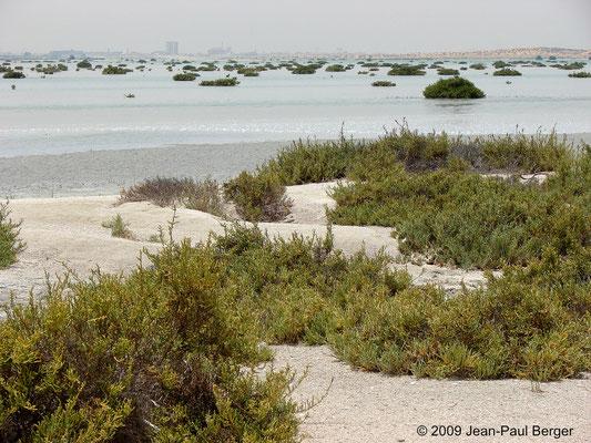Mangrove près de Umm Al Quwain