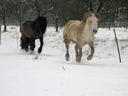 Spaß im Schnee // (c) C. Lössl