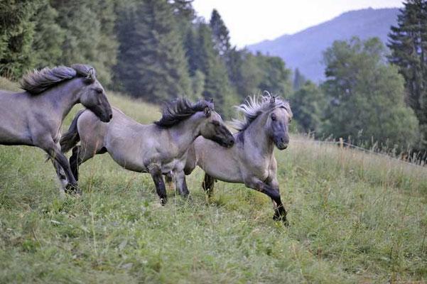 Kilnacasan Montgomery,Ranger und Rebel im Schwarzwald // (c) Schaller