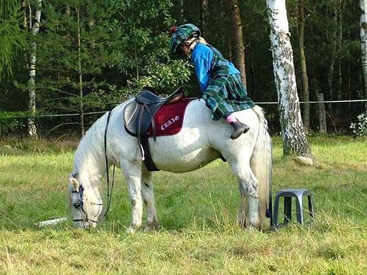How to mount a pony properly // (c) Hensel