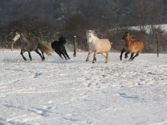 Im Schnee // (c) Brauer