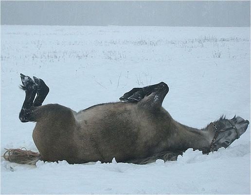 Marylin nimmt ein Schneebad // (c) Melanie Gutschker